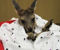 A Joey visits school : Image 2