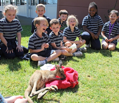 A Joey visits school